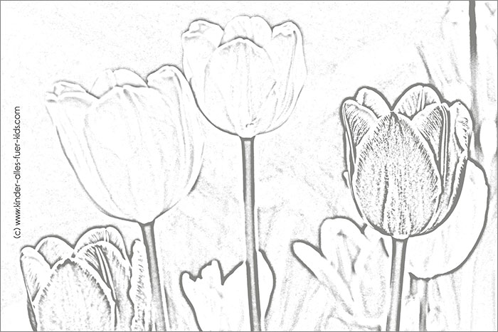 ausmalbilder blumenwiese